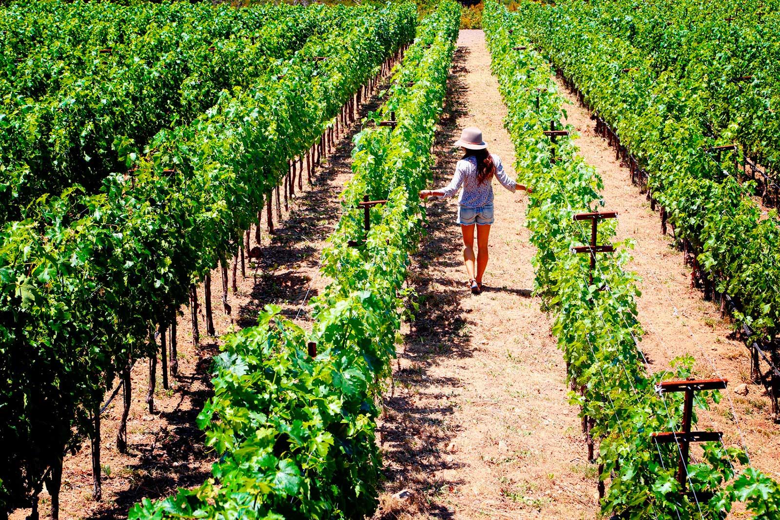 Danica Patrick wine