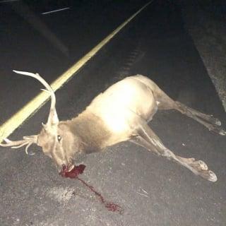 Jordan Anderson hit an Elk
