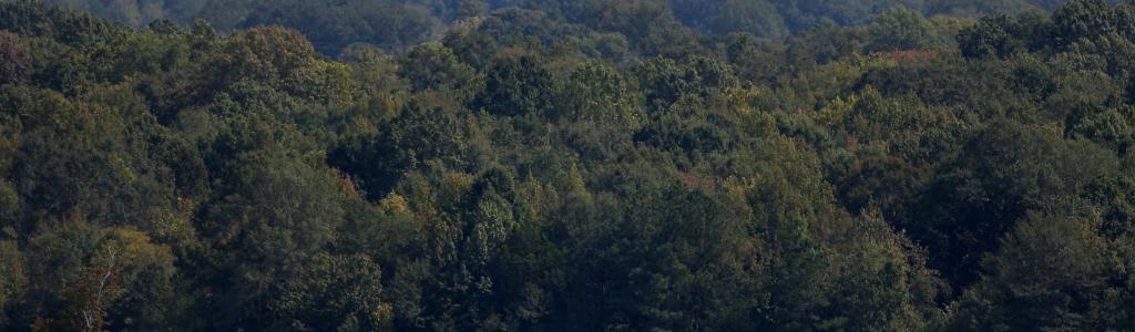 Kurt Busch sent airborne in wild Talladega crash (Video)